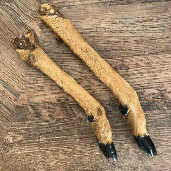 Szárított őzlábak kutyáknak