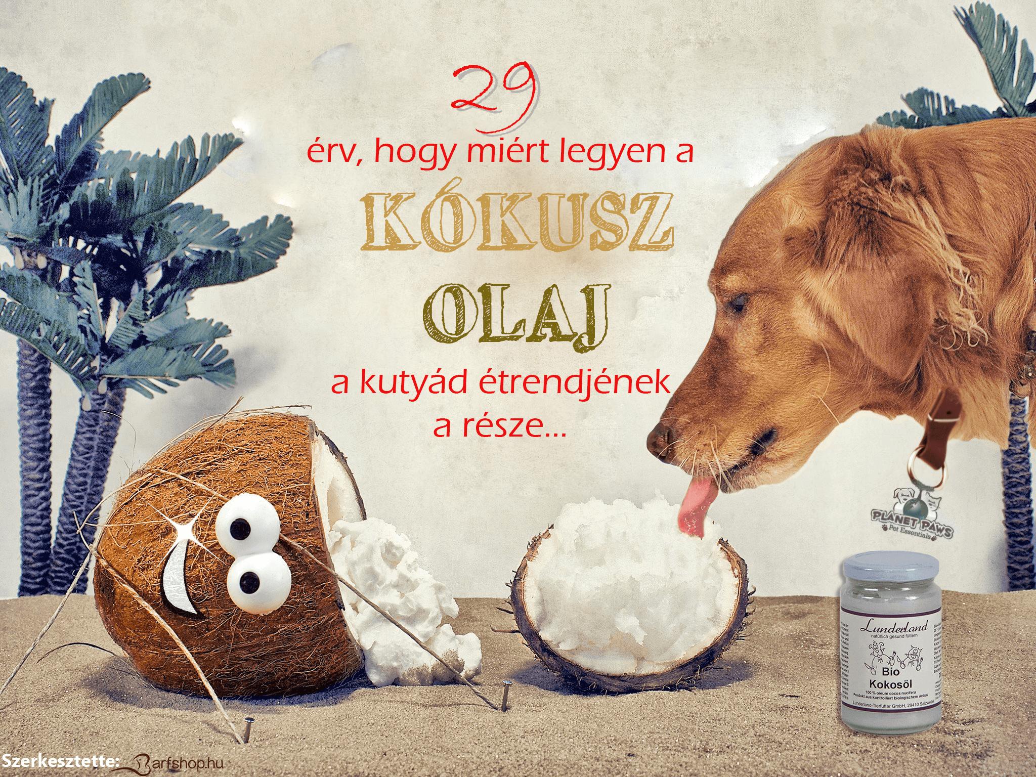 29 érv, hogy miért legyen a kókuszolaj a kutyád étrendjének a része